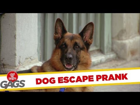 [Just4Laughs Gags Vol 1] Tập 104: Dog Escape Prank