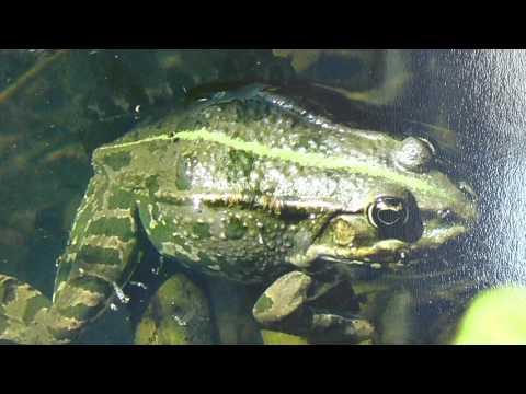 Hulín - Záhlinické rybníky
