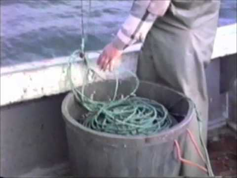 Long Line Fishing in the Bay of Fundy, Nova Scotia Canada