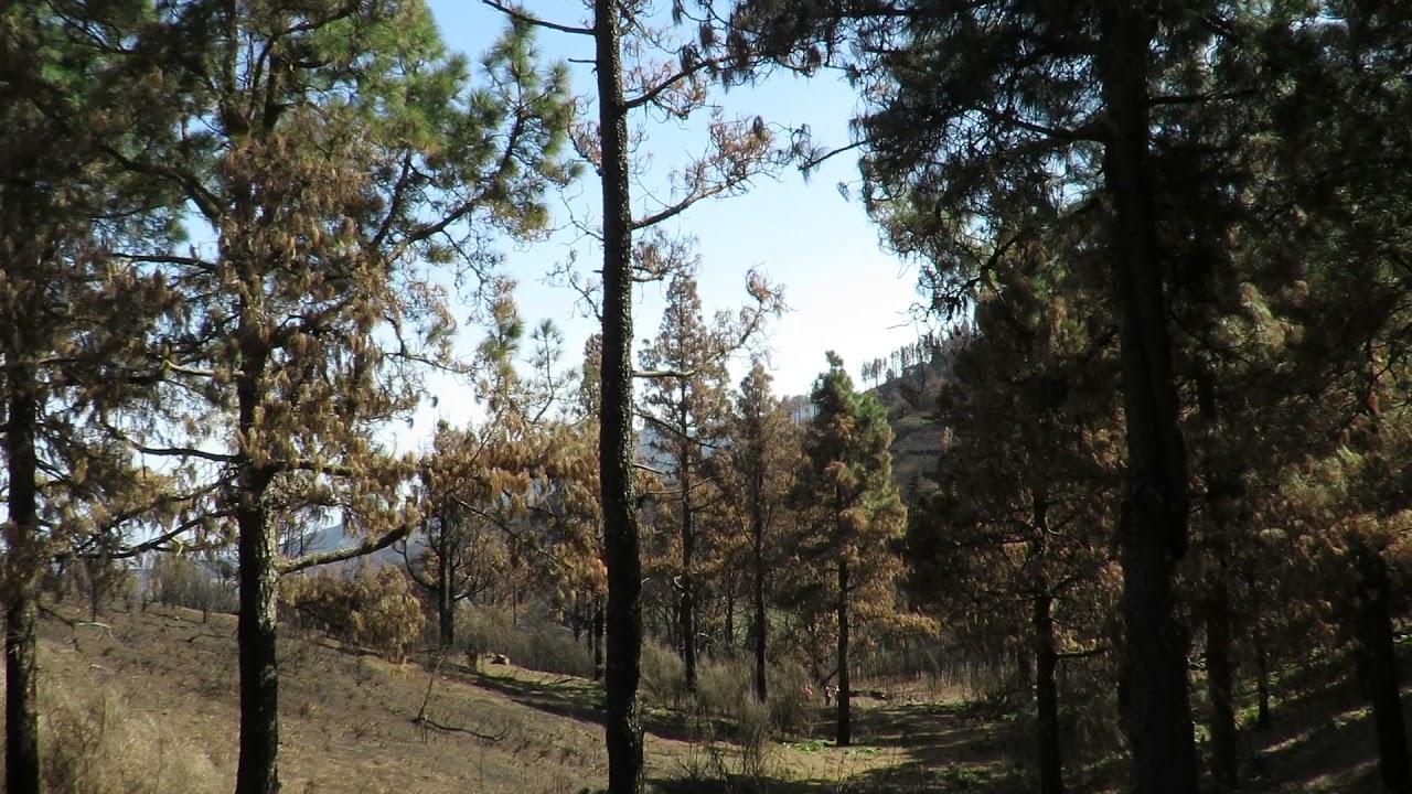 Yleistä - Suomalaiset istuttavat puita<br /> Kanarian paloalueelle