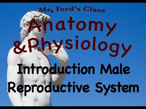 Video Male Reproductive System : Introduction To The Male Reproductive System (19:01) download in MP3, 3GP, MP4, WEBM, AVI, FLV January 2017