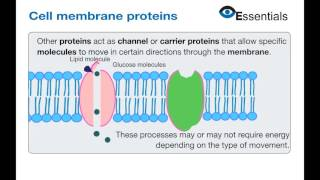 Essentials Video Animation - Cell Membrane Proteins