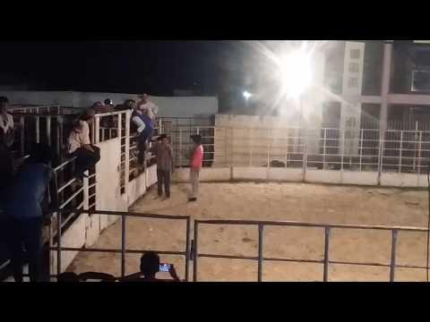 Festa de rodeio em tufilândia