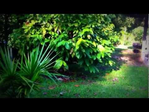 Video of Banana Lodge