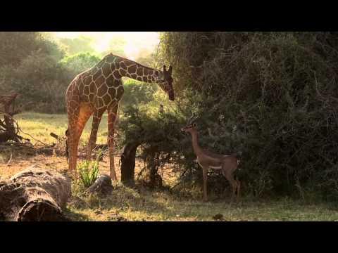 Speel DUIKEN Team in Kenia af