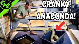 Video CLEANING CRANKY ANACONDAS! MP3, 3GP, MP4, WEBM, AVI, FLV Agustus 2019