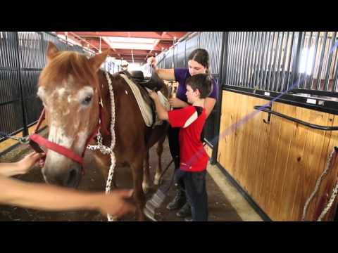 Long Island Horseback Riding Lessons- New York Equestrian Center