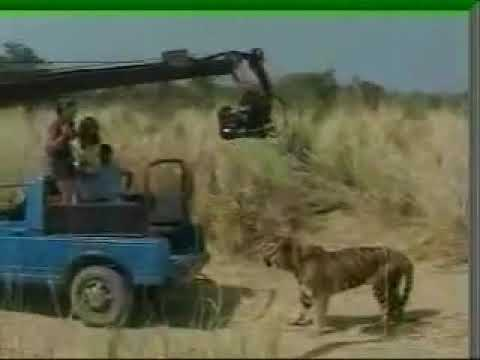 KAAL MAKING WITH TIGERS
