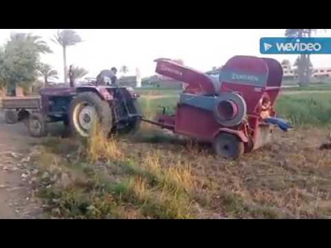 شاهد بالفيديو .. موسم حصاد القمح بقري جنوب الجيزة