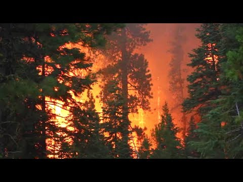 Forest Threats: Forest Fire
