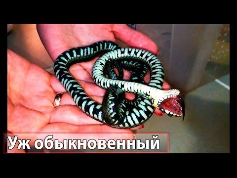 Змея притворяется мёртвой