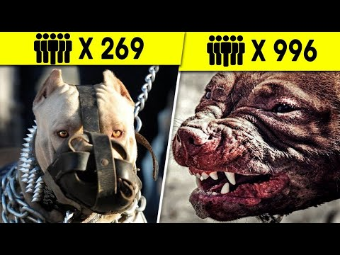 10 Dog Breeds that You Should Never Mess With