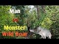 Video Berburu babi nangoe monster 100kg up