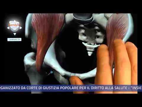 Family Tg 07/03/2014 – Le fratture dovute alla fragilità ossea nelle donne over 50
