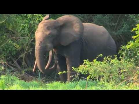 Saisie de 44kg d'ivoire à Sindara
