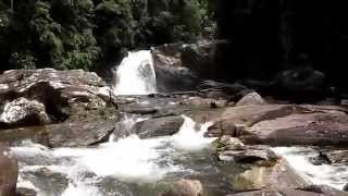 Sinharaja Sri Lanka  city pictures gallery : Im Sinharaja - Regenwald , Sri Lanka 29.09.14