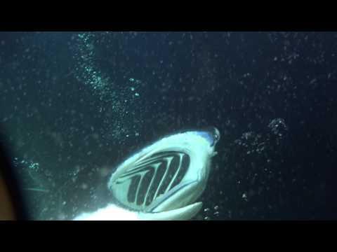 Diving Hawaii Kona