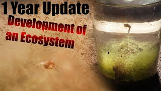 Video A Natural Ecosphere | 1 YEAR Update! A Very Successful Closed Ecosystem MP3, 3GP, MP4, WEBM, AVI, FLV Agustus 2019