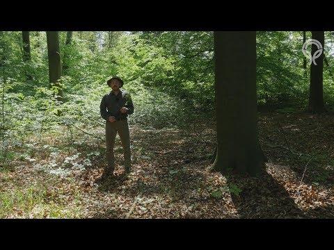 Lesní školkařství
