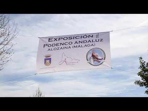 III MUESTRA DEL PODENCO ANDALUZ