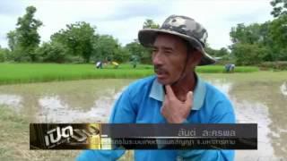 Pied Pum ชำแหละเกษตรพันธสัญญา - Thai Talk Show