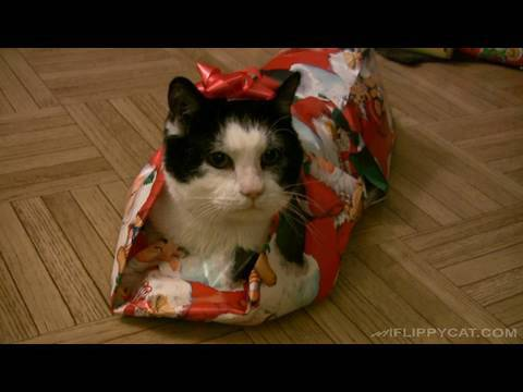 Cat Wrapped Up Like A Christmas Present