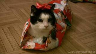 How To Wrap A Cat For Christmas <3