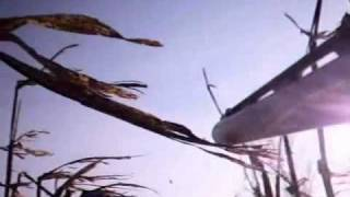 Video Chasse Pigeon Corbeau