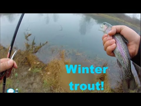 15+ fishing in 1 hr St  Louis Ponds (ft.  PDX fishing)