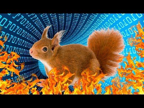 Las ardillas son la peor amenaza para el internet
