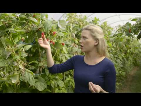 Driscoll's – Fast Fact – Raspberry Quality | Everyday Gourmet S6 EP43