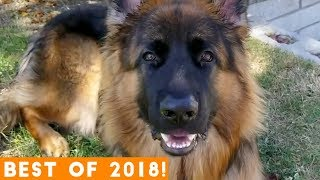 Video BEST ANIMALS OF 2018 Pt. 2  | Funny Pet Videos MP3, 3GP, MP4, WEBM, AVI, FLV Januari 2019