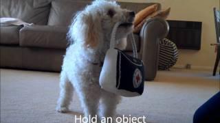 Miniature Poodle Tricks #4