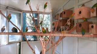 Harika Papağan türleri ve Arakari kuşu
