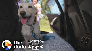 Dog Siblings Go On A Cross-Country Road Trip To Their Forever Homes | The Dodo Adoption Day by The Dodo