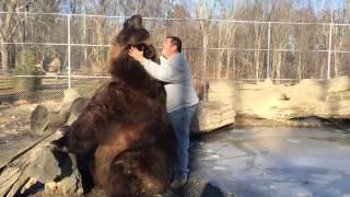 Pieszczoty niedźwiedzia Jimbo