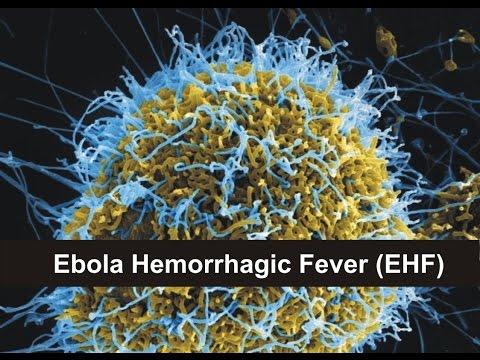 viral hemorrhagic fever and ebola virus