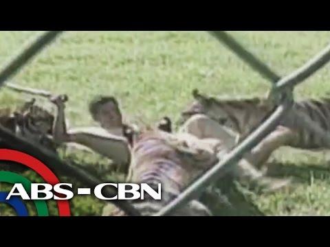 RealiTV: Tiger attack in Batangas