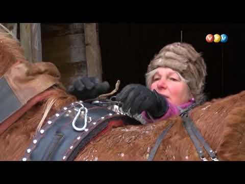 Zirgi Rencēnu pagasta Pupājos