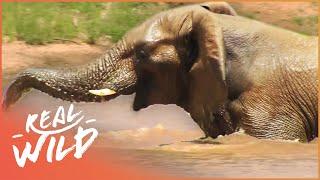 Nonton Animal Kingdom - Birds & Elephants [Documentary Series] | Wild Things Film Subtitle Indonesia Streaming Movie Download
