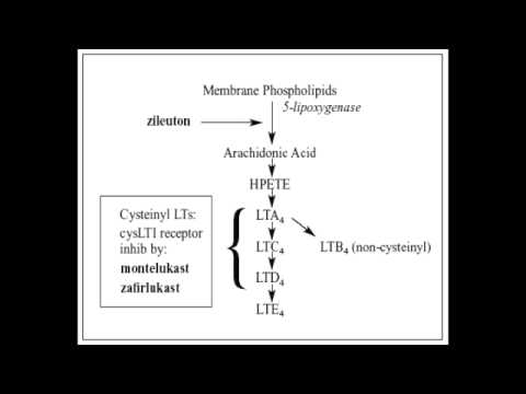 Asthma Drugs - Antileukotrines (Montelukast, Zafirlukast & Zileuton)