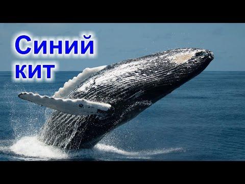 Синий кит (Blue Whale) - не игра