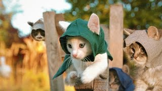 Assassin's Kittens Unity - YouTube