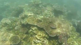 Hienghene New Caledonia  city images : Snorkeling at Koulnoue near Hienghene, New Caledonia