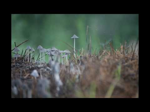 kvertrees - One hour of early morning footage of mushrooms growing. Notice the mites running up and down the talk stalk of hay.
