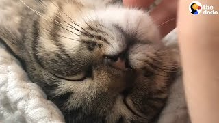 Cat Purring Has To Be The Most Relaxing Sound Ever | The Dodo by The Dodo