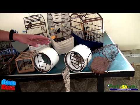 PM apreende pássaros silvestres e arma de fogo em Diamante do Sul, Pr.