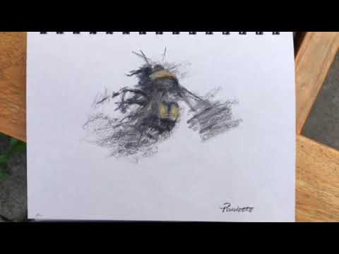 Bee drawing in charcoal