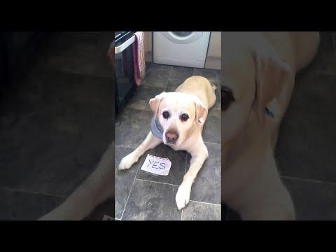Koiralle kelpaa paremmin liha kuin lääkkeet