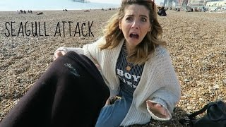 SEAGULL ATTACK!! DAILY VLOG || MARK FERRIS